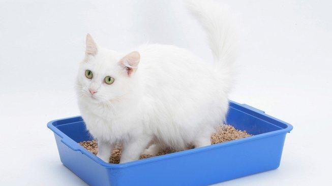 Zánět močových cest: Velké a nebezpečné trápení koček a kocourů
