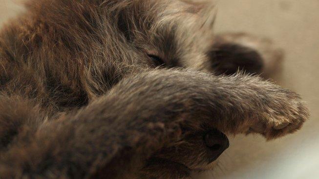 Proč psi jedí exkrementy?