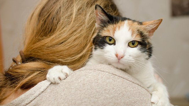 Pravda o kočkách: Chovatel jim rozhodně není lhostejný