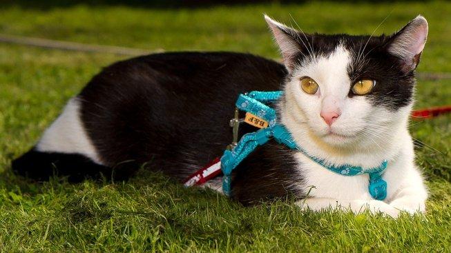 I kočka si může užít venčení. A vy s ní!