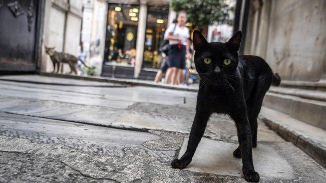 Město, kde vládnou kočky a koťata