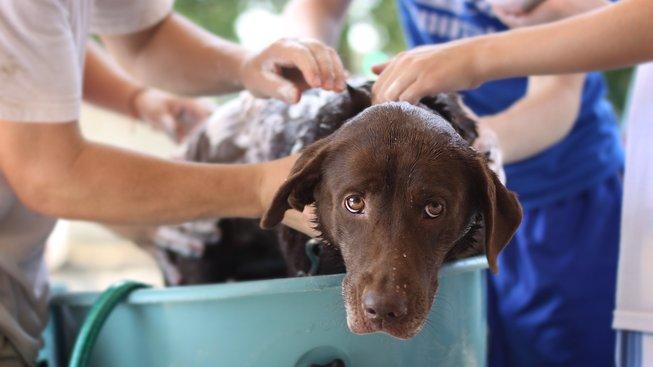 Jak vykoupat psa - a nezbláznit se