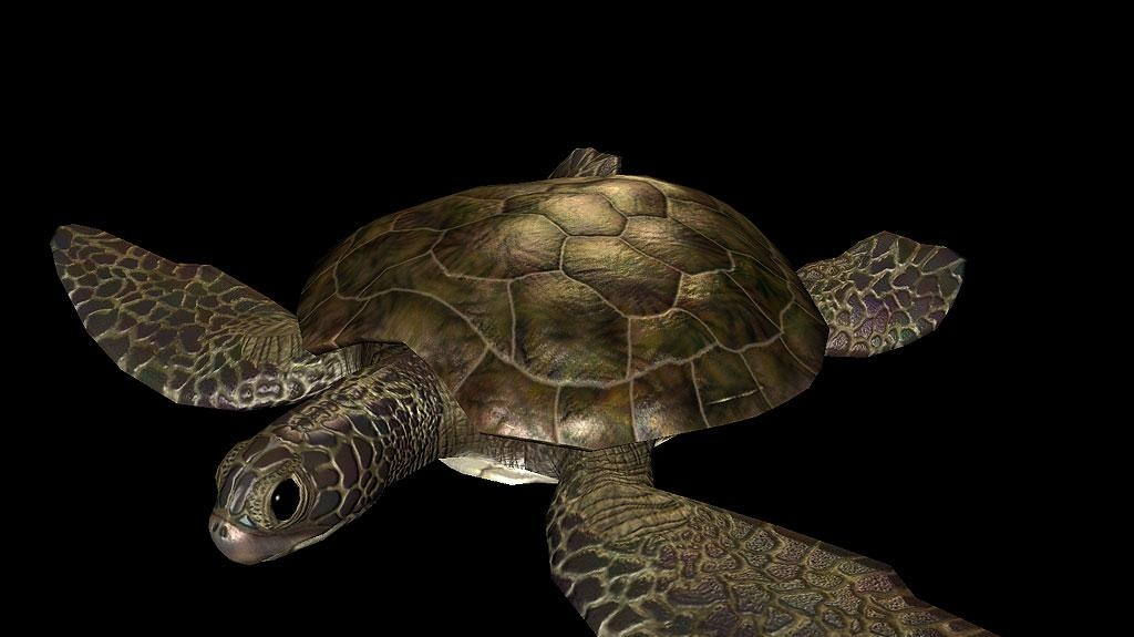 Pěkné obrázky z MMORPG EverQuest II