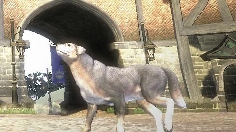 Pořiďte si nového psa do Fable III