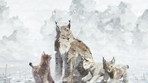 V nelítostné přírodní adventuře Shelter 2 nahradí jezevce rysové