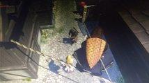 Assassin's Creed Ragnarok - spekulace