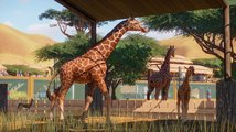 Planet Zoo má i ty nejmenší detaily – žirafy střihají ušima a kopou do vlastních bobků