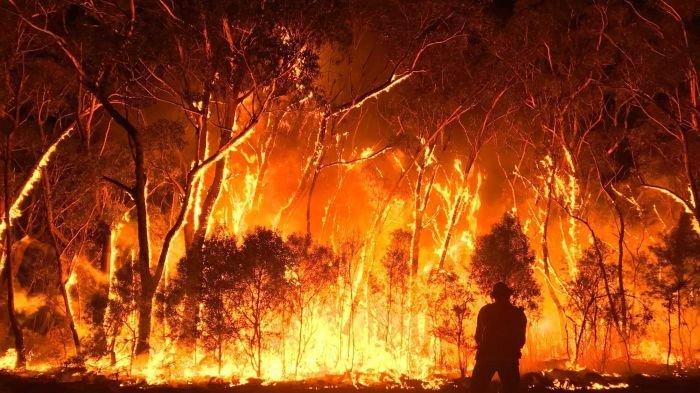 Nejen celebrity přispívají Austrálii. Už i herní studia pomáhají s krocením požárů