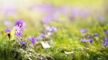 Jarní únava a rituály proti ní