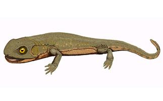 Discosauriscus