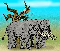 Elephas recki