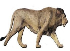 Lev americký