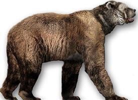 Medvěd krátkočelý