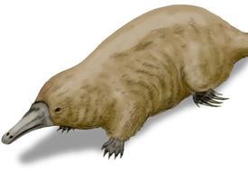 Monotrematum sudamericanum