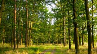 V současné době se připravuje systém evidence pohybu dřeva i na úrovni EU, Foto:SXC