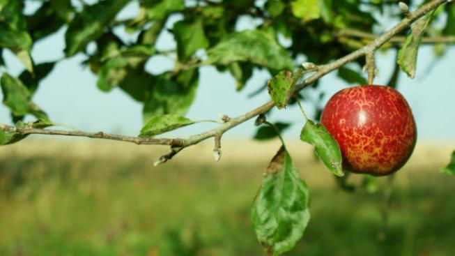 Podle prvních odhadů prý jen škody ovoci dosáhnou půl miliardy korun, Foto:SXC