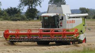 Například obilovin totiž sklidili zemědělci skoro o pětinu meziročně více a úroda brambor se zvýšila o více než 18 procent, Foto:SXC