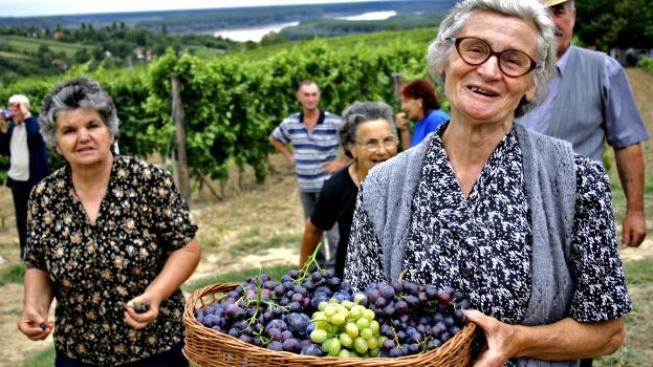Čínu zajímá také moravské víno, Foto:SXC