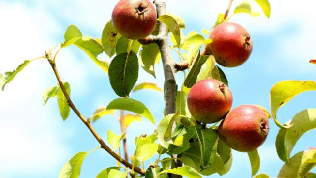 Kam zmizelo české ovoce? V supermarketu naše jahody ani jablka neseženete Foto:SXC, Text:MED