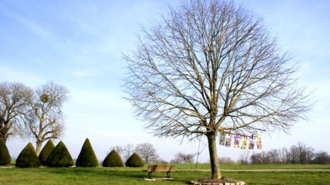Dnes majitel může u svého domu v oplocené zahradě bez ptaní pokácet i strom, který na daném místě rostl desítky let a dotvářel podobu veřejného prostoru. Foto:SXC