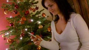 V ČR se prodává dlouhodobě až 1,3 milionu vánočních stromů. Prodej plastových stromků klesá, jejich podíl je asi deset procent. Foto:SXC