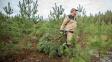 Vánoční stromky budou letos zelenější, pomohl jim déšť