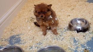 Zákon od února zakazuje prodej štěňat a koťat ve zverimexech.