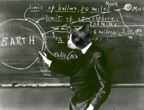 Kočka u tabule
