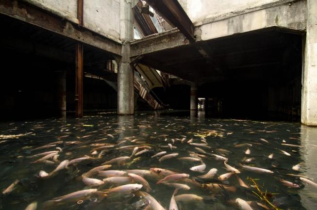 Ryby v obchodním domě