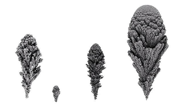 Počítačová simulace růstu buněčných struktur