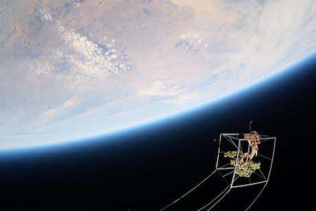 Bonsaj ve stratosféře