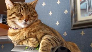 Kočka na rozpáleném plastovém routeru