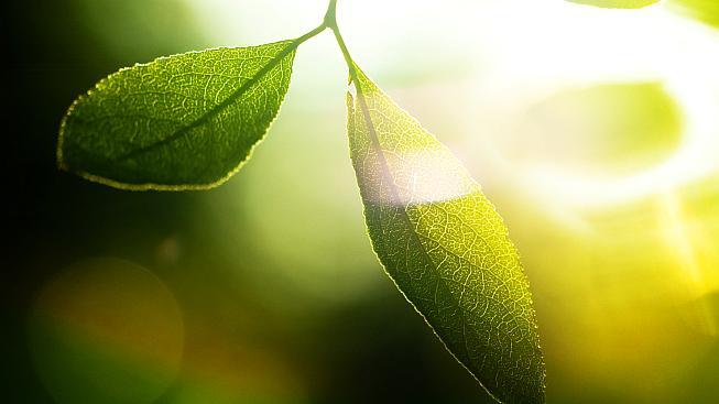 Pro lístek stromu je to samozřejmost, pro vědce zapeklitý oříšek