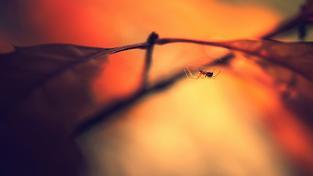 Při umisťování pavučin spoléhají pavouci nejenom na svůj instinkt, ale také na proudění vzduchu