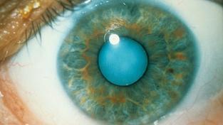 Úžasné optické iluze a jejich vědecké vysvětlení
