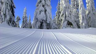 Bílá barva je sněhu vlastní ze zcela konkrétních fyzikálních důvodů
