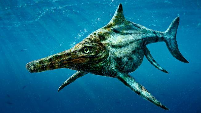 Ichtyosaurus je prapraprapraprapříbuzným dnešních delfínů i velryb