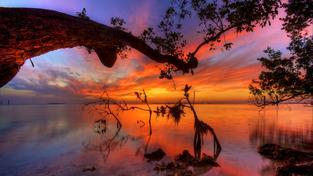Společenství mangrovů obepíná více než polovinu světových pobřeží