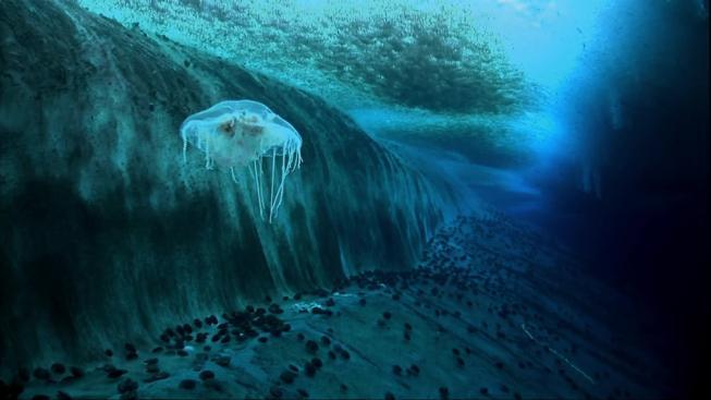 V dokumentu Encounters at the End of the World jsou k vidění i úžasné záběry z pod ledového příkrovu