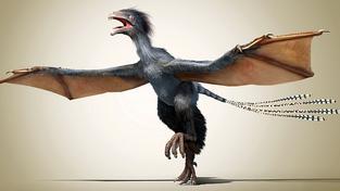 Hříčka pravěké přírody nebo nový druh dinosaura?
