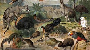 Původní, endemické druhy Austrálie