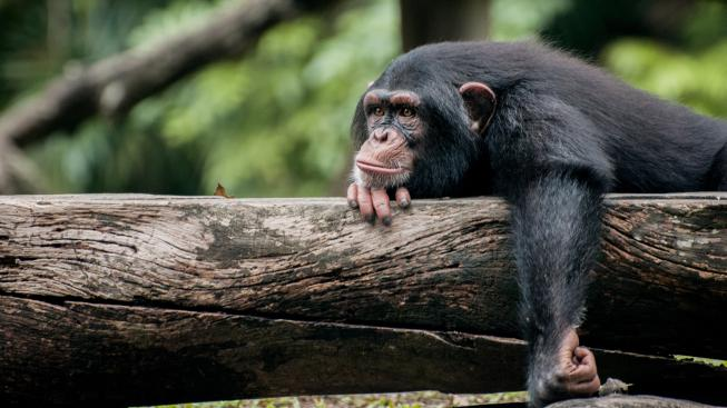Léčba HIV není žádná opičárna