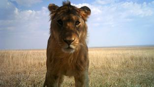Dobrý den, označili byste mě jako lvici, prosím?