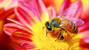 Moderní verze včelích medvídků by byla pěkně depresivní podívaná...