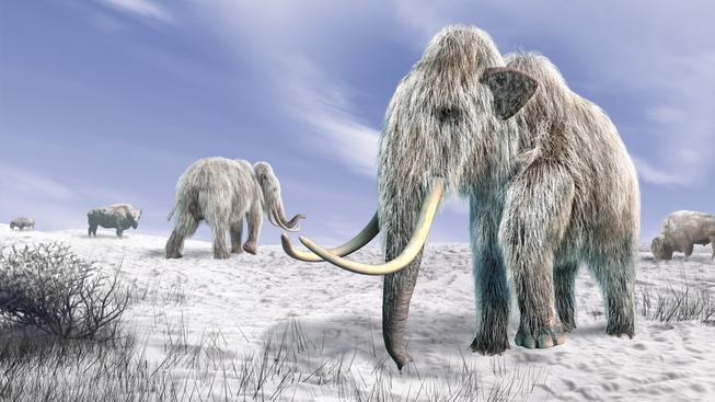 Mamuty podle vědců vyhubil člověk z doby gravettienské kultury, který je lovil ve velkém. Ilustrační foto