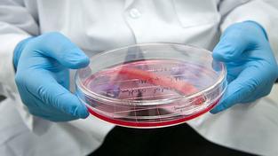 Výzkumníci hlásí průlom na cestě k pěstování orgánů v laboratoři