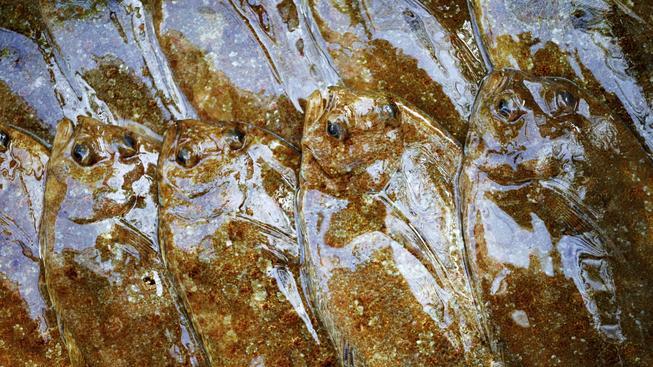 Rybí maso je zdravé, rybí tuk je zdravý, a teď se ukazuje, že i rybí sliz je zdravý