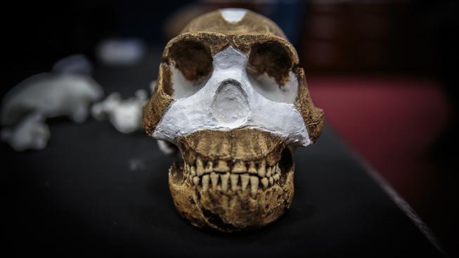 Lebka nově objeveného typu člověka Homo Naledi