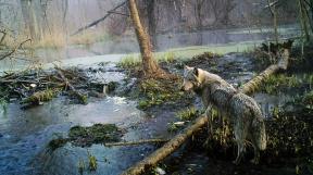 vlk v Černobylu