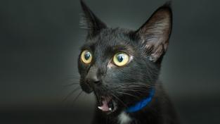 Casey Christopherová fotí černé kočky už rok. Většině z nich fotky pomohly k jejich adopci